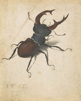 Illustration of Beetle by Albrecht D�rer