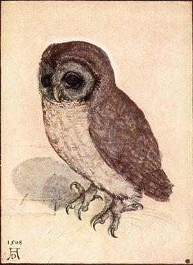 Illustration of Owl by Albrecht Durer